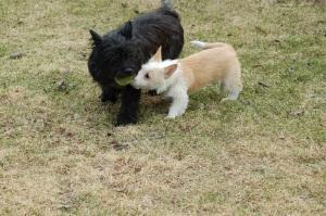 Basil synes at Vile er en kul kis!