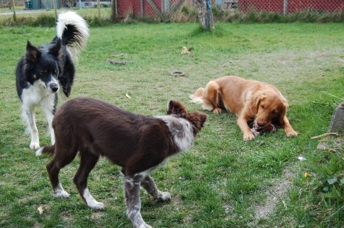 Easy, Bea og Get Me leker i hagen!