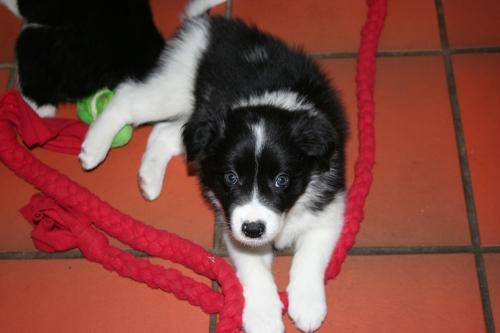 Salto skal til fam Haugen og bli en aktiv familiehund