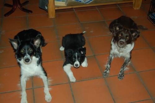 Bea, Oy og GetMe
